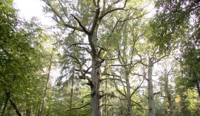 Rozkradają polskie lasy