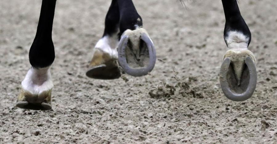 Polak zdyskalifikowany przez otarcia skóry u konia