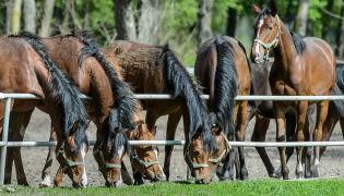 Stadnina koni w Janowie