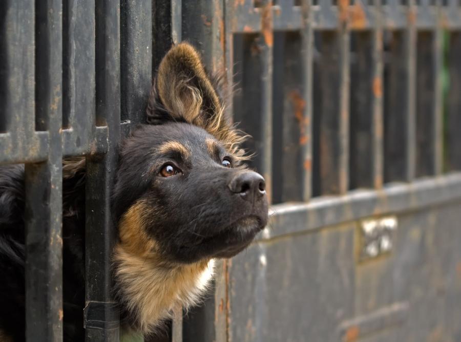 Zgodnie z projektem zaostrzone zostaną kary dla osób znęcających się nad zwierzętami