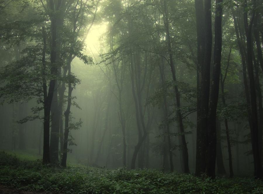 Polacy zgubili się w lesie w Rumunii