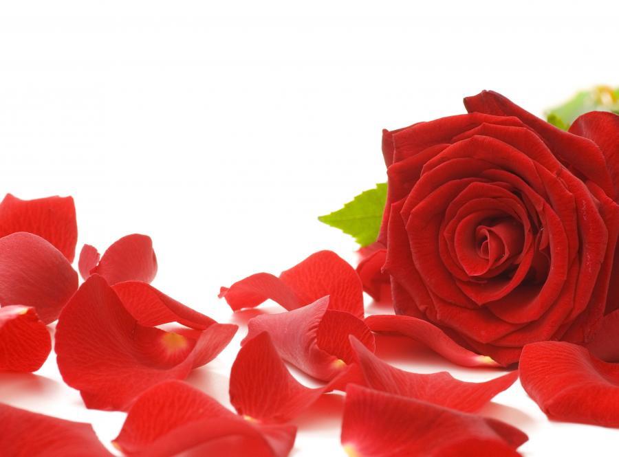 Nalewka z płatkami róż i miodem działa silnie rozgrzewająco, leczy chore gardło i poprawia apetyt