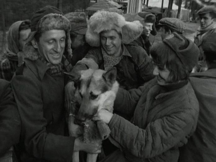 Czterej pancerni i pies