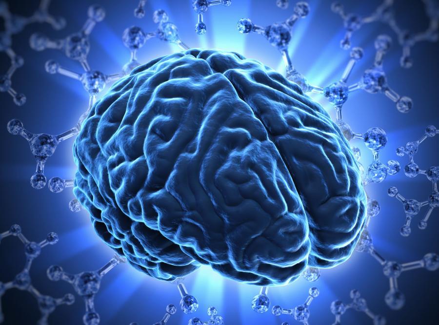 8. Mniejszy mózg