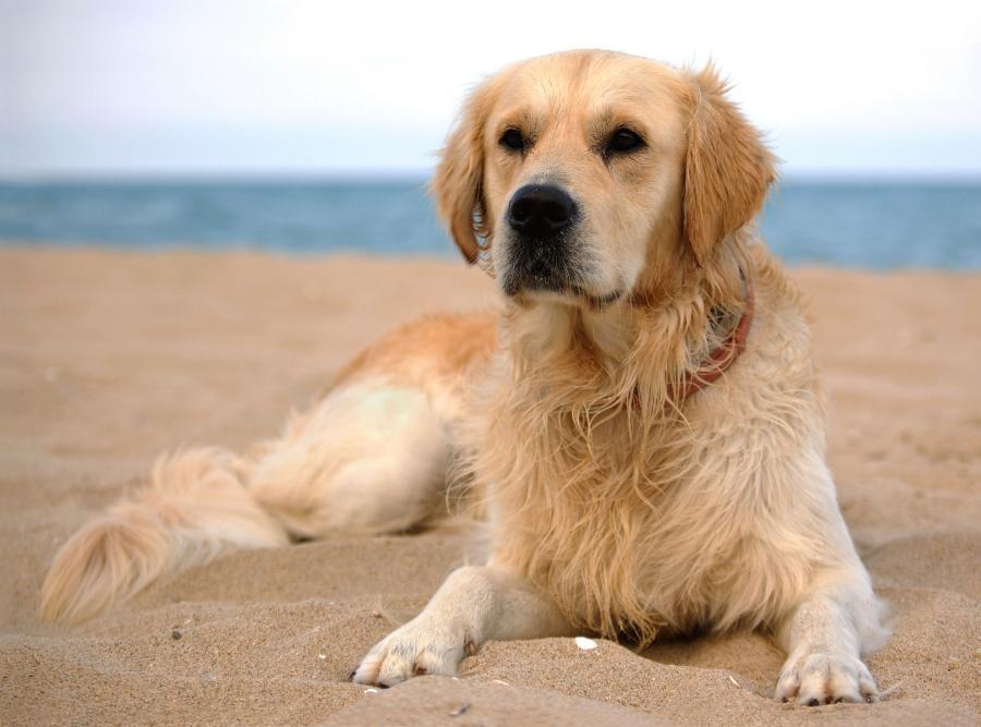 Pies też ma prawo do wypoczynku