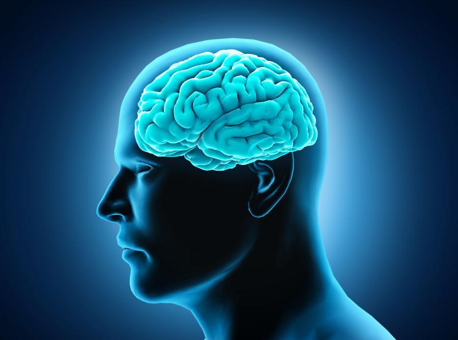 4. MIT: Obszary mózgu są ściśle sprofilowane
