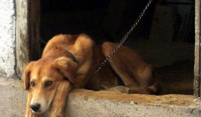Mężczyzna z Wieliczki od 50 lat zabija psy i przetapia je na smalec