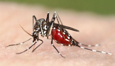 Jak odstraszać komary?