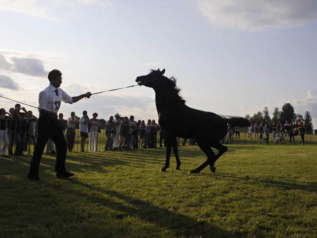 Kupcy z całego świata przyjeżdżają tu w słusznym przekonaniu, że konie, które nabędą, niosą w sobie najcenniejsze linie, że tradycyjny wychów i pielęgnacja zapewniają im właściwy rozwój i kształtują dobry charakter, a próba wyścigowa niesie gwarancję zdrowia wielu pokoleń