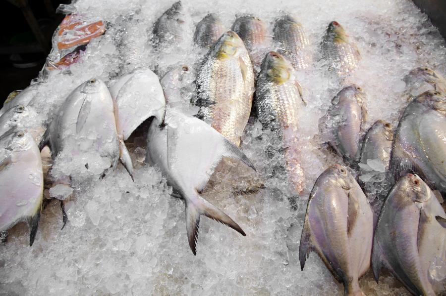 Mrożone ryby