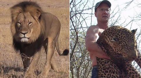 Walter Palmer i jego ofiara, lew Cecil