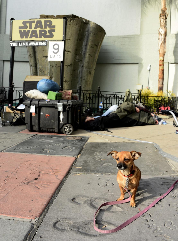 """Fani i... ich psy czekają na premierę """"Gwiezdnych wojen"""""""