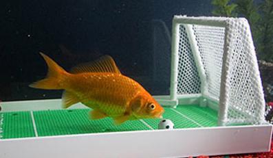 Zadbaj o kondycję rybki